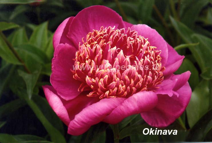 Окинава (Okinawa)